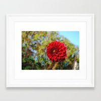 dahlia Framed Art Prints featuring Dahlia by Renee Trudell