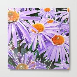 Lavender Asters Metal Print