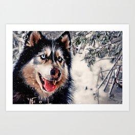 Playful Husky Art Print