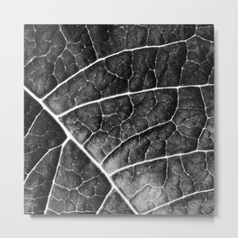LEAF STRUCTURE no2a BLACK AND WHITE Metal Print
