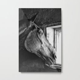 looking for love Metal Print