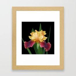 Iris 'Supreme Sultan' Framed Art Print