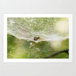 Itsy Bitsy Spider Art Print