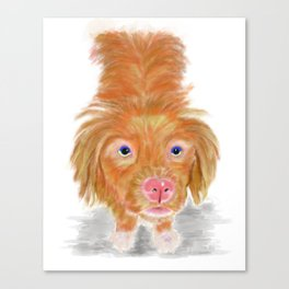 Jackson The Nova Scotia Duck Tolling Retriever Canvas Print