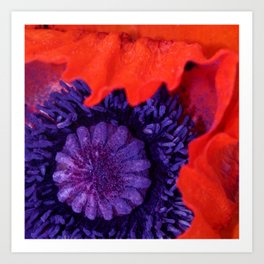Super Macro Poppy Art Print