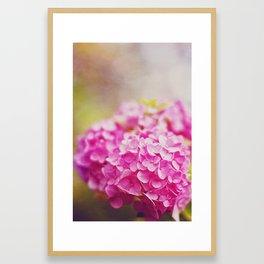 Pink Hydranga Framed Art Print
