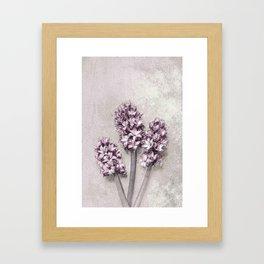 Delicate Hyacinths Framed Art Print