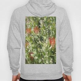 Proteas Hoody