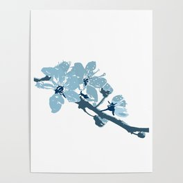 Blue Cherry Blossoms Poster
