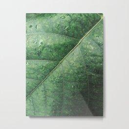 Plantae VIII Metal Print