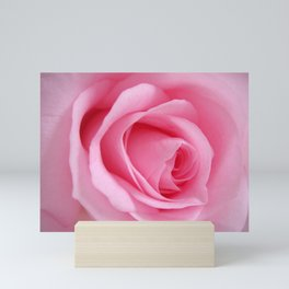 Light Pink Rose Mini Art Print