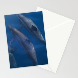 Dolphin Duo Stationery Cards