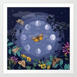 Moon Phases and Nocturnal Moths Art Print