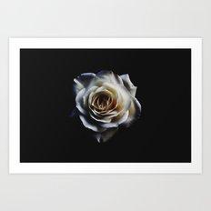 WHITE - ROSE - NATURE Art Print