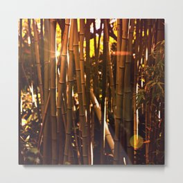 Autumn bamboo forest #photography #autumn Metal Print