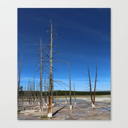 Lodgepole Pines In Geyser Basin Canvas Print