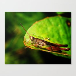 Look Before You Leap Canvas Print