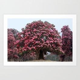 Rhododendron tree Art Print