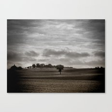 Lonely Tuscan Tree Canvas Print