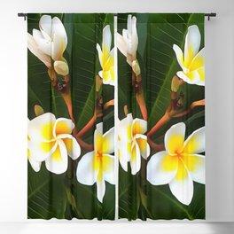 Frangipani Blossom Cluster Blackout Curtain