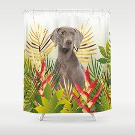 Weimaraner Dog in garden Shower Curtain
