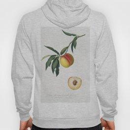 Peach (Persica julodermis) from Pomona Italiana (1817 - 1839) by Giorgio Gallesio (1772-1839) Hoody