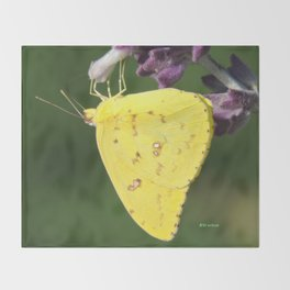 Orange Sulphur Butterfly Throw Blanket