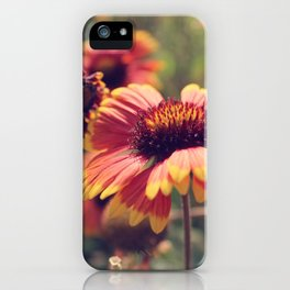 Gaillardia flower iPhone Case