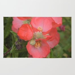 Apricot Mallow Blossoms Rug