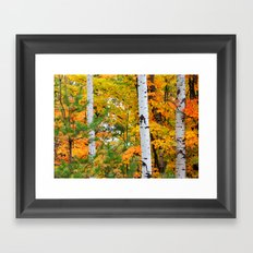 Birch Trees and Autumn Colors Framed Art Print