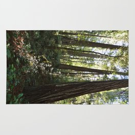 Through the redwoods Rug