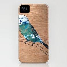 Budgerigar iPhone (4, 4s) Slim Case