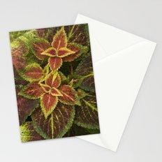 Coleo Coleus Stationery Cards