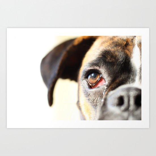 Eye of a boxer dog Art Print