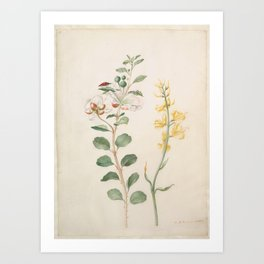 Study of Capers, Gorse, and a Beetle Art Print