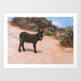Donkey in Peru Art Print