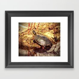 Painted Turtle Reflected in Water Framed Art Print