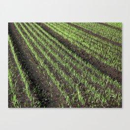 Fertile Farmland Canvas Print