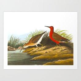 Pigmy Curlew Bird Art Print