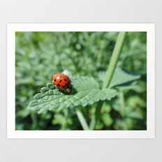 Ladybug on a Leaf Art Print