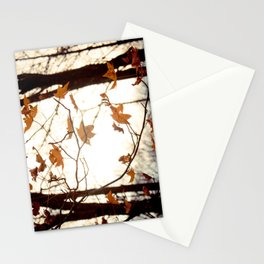 Sunlight Through the Branches Stationery Cards