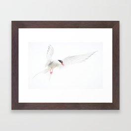 Painterly Artic Tern Framed Art Print
