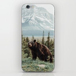 Bear Bear iPhone Skin