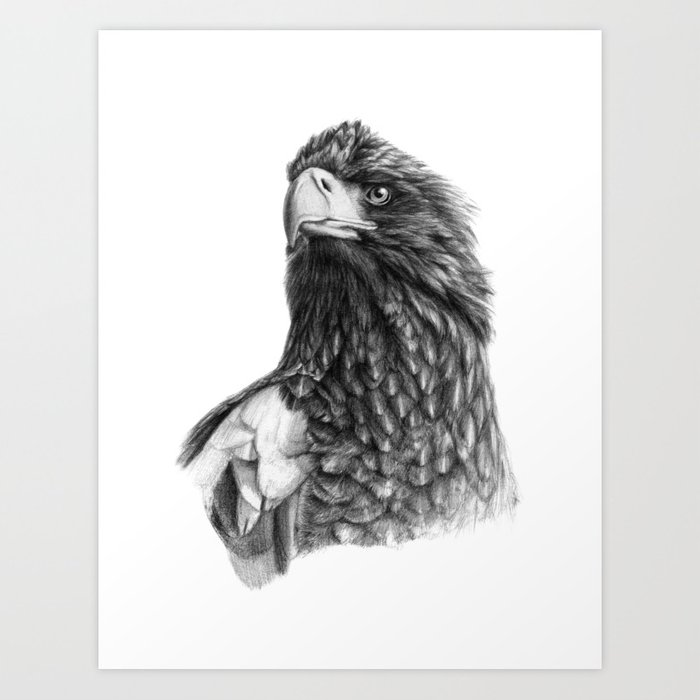 Steller's sea eagle G2013-073 Art Print