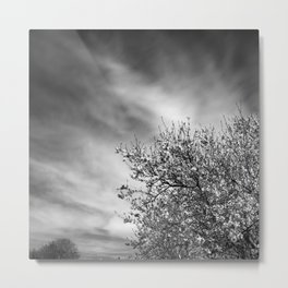 Flowering almond. Winter spring. BN Metal Print