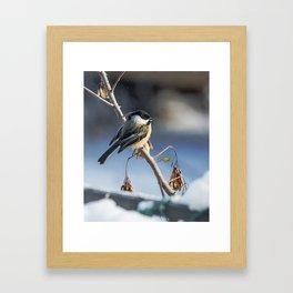 Christmas Chickadee II Framed Art Print