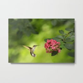 Hummer in Flight Metal Print