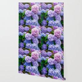 Purple Hydrangeas Wallpaper