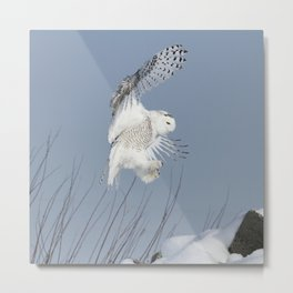 Air Acrobat Metal Print