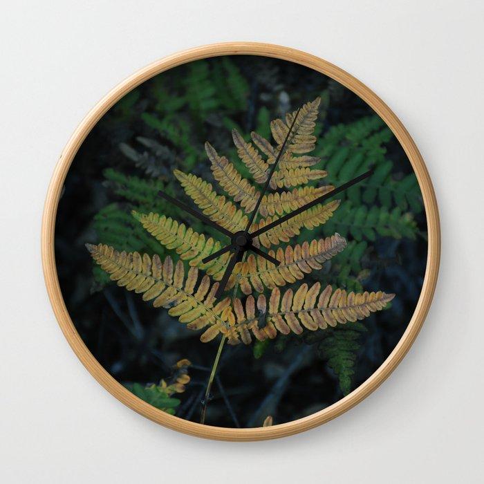 Moody Fern in Santa Cruz Forest Wall Clock